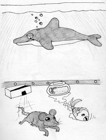 Iiris Katajamaa Delfiini